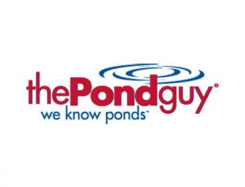 The Pond Guy: Supporting The Future Ecosystem